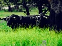 El Toro, desde casa a su destino; La Plaza